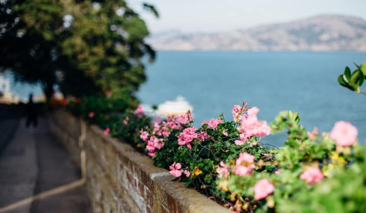 flowers lining the wall of alcatraz with bay in background, alcatraz island