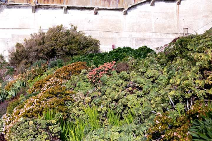 garden on grounds of alcatraz island