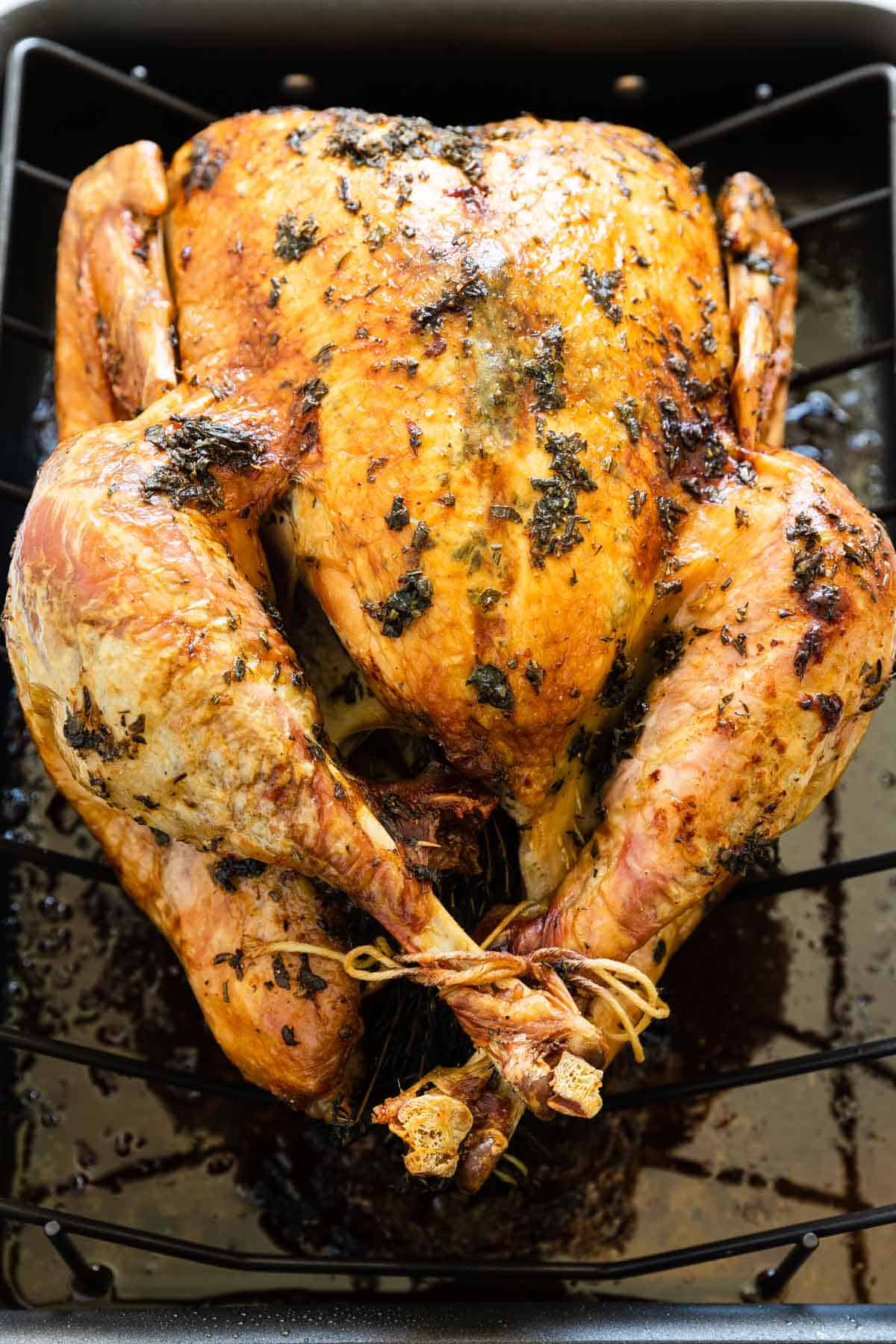 roasted whole turkey in a roasting pan